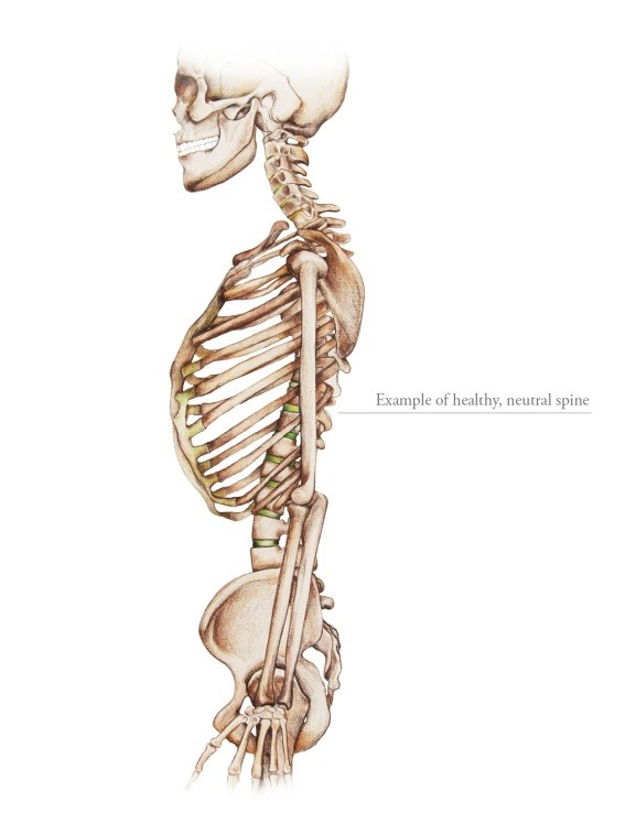 Neutral Spine Alignment 1
