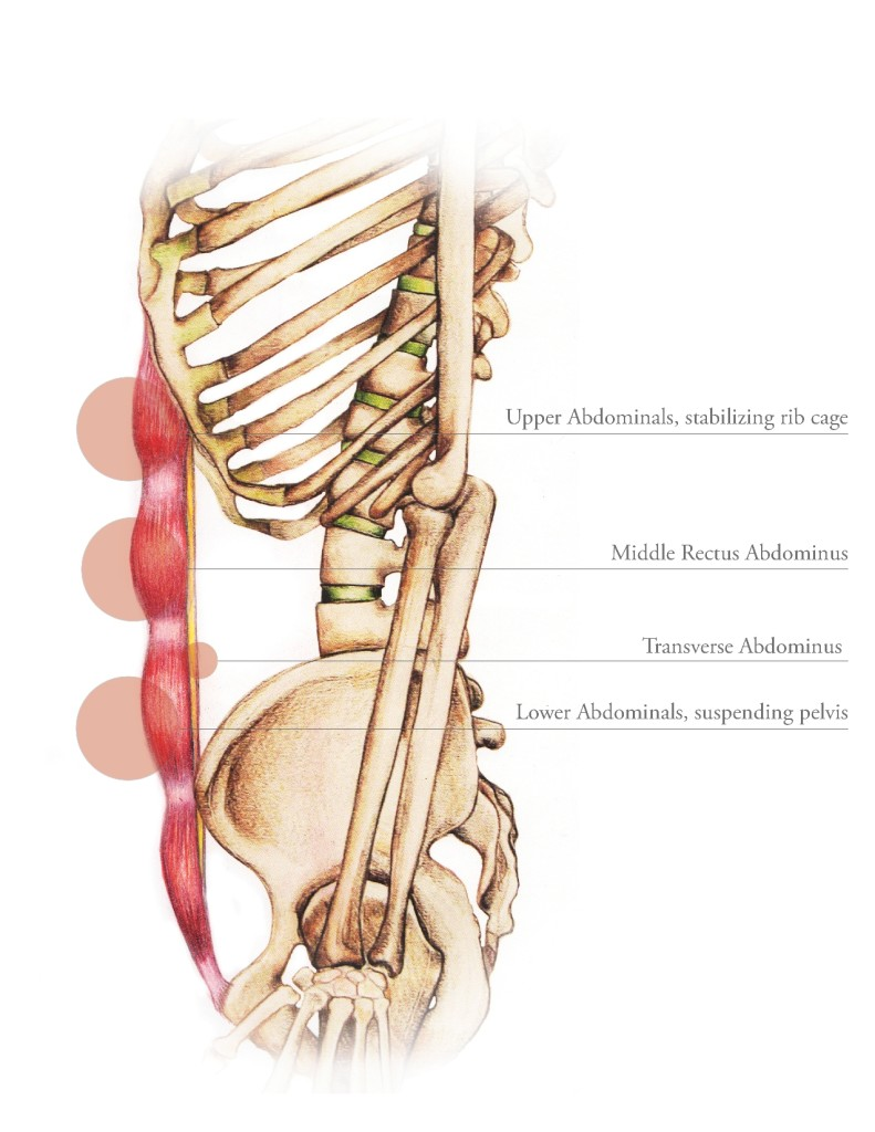 Neutral Spine Alignment 2